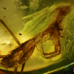 Inclusions at the exhibition – praying mantis (Mantodea)